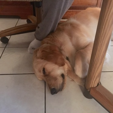 Poundcake resting at Jess's feet.