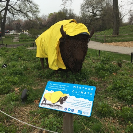 A buffalo in a rain coat outside the Peggy Notebaert Nature Museum