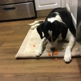 "Gracie enjoyed her ""treats"" that fell during veggie prep."