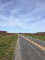Long roads in Delaware near Fifer Orchards.