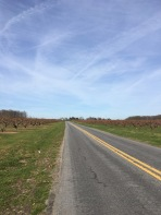 Long roads in Delaware near Fifer Orchards.